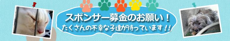 スポンサー募金 地域猫 アイスタイル ホームページ制作 ねこワン