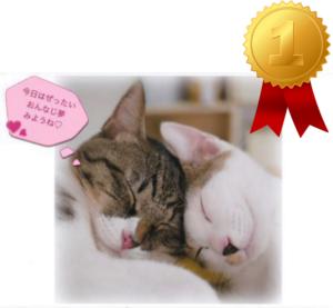 ランキング 1位  愛媛 えひめイヌ・ネコの会 アイスタイル aistyle ホームページ制作