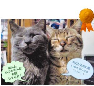 ランキング 3位  愛媛 えひめイヌ・ネコの会 アイスタイル aistyle ホームページ