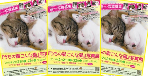 平成27年2月22日 猫の日 第22回 うちの猫こんな猫写真展 愛媛 えひめイヌ・ネコの会 アイスタイル aistyle ホームページ制作