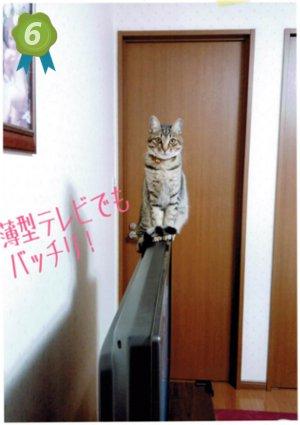 ランキング 6位 愛媛 えひめイヌ・ネコの会 アイスタイル aistyle ホームページ制作