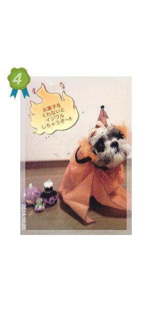 ランキング 4位  愛媛 えひめイヌ・ネコの会 アイスタイル aistyle ホームページ