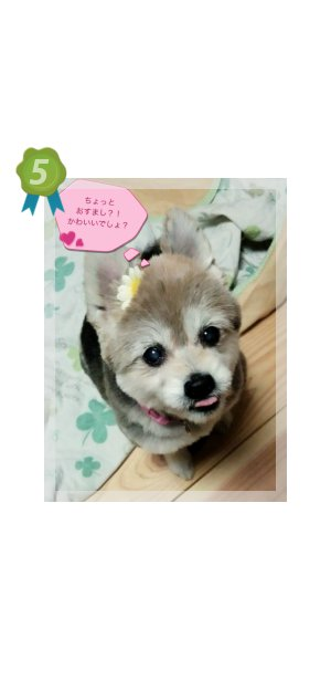 ランキング 5位  愛媛 えひめイヌ・ネコの会 アイスタイル aistyle ホームページ制作