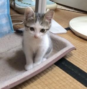 里親募集・ユウちゃん♀(トライアル中)